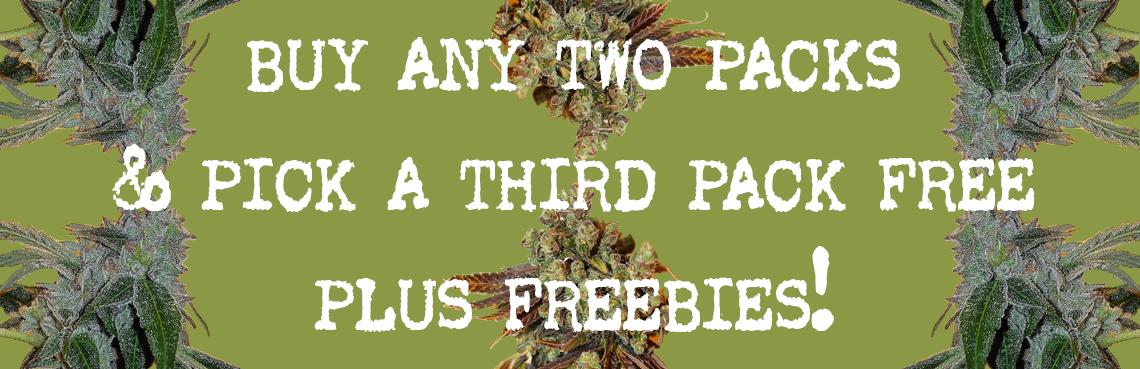 buy any two packs and get a third free plus freebies included